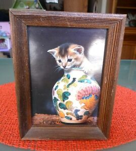 KITTEN IN A MAJOLICA GINGER JAR - VASE --PICTURE/PLAQ<wbr/>UE-- FRAMED 8 BY 6 INCHES