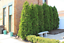 EMERALD-GREEN-Arborvitae-3-034-pot-Thuja-occidentalis thumbnail 4