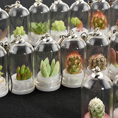 30 Live Plant Wearable Necklace Apple Cactus Miniature Succulent Cacti Terrarium