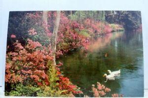 Alabama-AL-Theodore-Bellingrath-Gardens-Postcard-Old-Vintage-Card-View-Standard