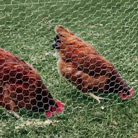 Chicken Wire Plaster Wire Reinforced Metal Mesh Cage Fencing (choose Your Size)