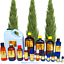 3ml-Essential-Oils-Many-Different-Oils-To-Choose-From-Buy-3-Get-1-Free thumbnail 32