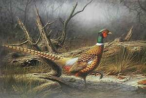 Ring-Necked-Pheasant-by-Dennis-Schmidt-Bird-Hunting-Ltd-Ed-Art-Print