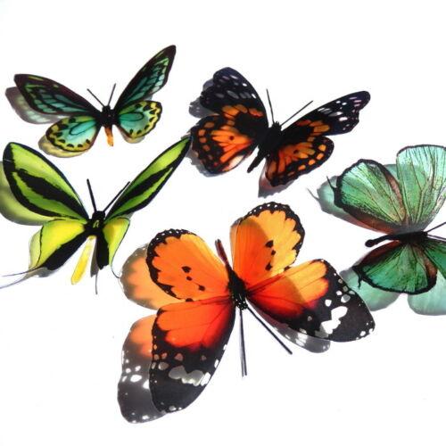 Crafts Bouquets Australian Butterfly Packs Decorations Weddings Wall Art