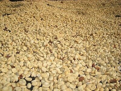 Up To 100 lbs Colombian Medellin Supremo Green Coffee Beans