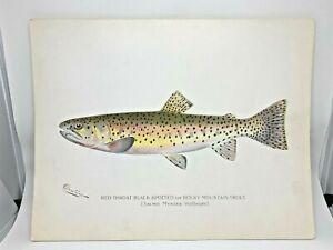 Original-Antique-Denton-Fish-Print-Rocky-Mountain-Trout