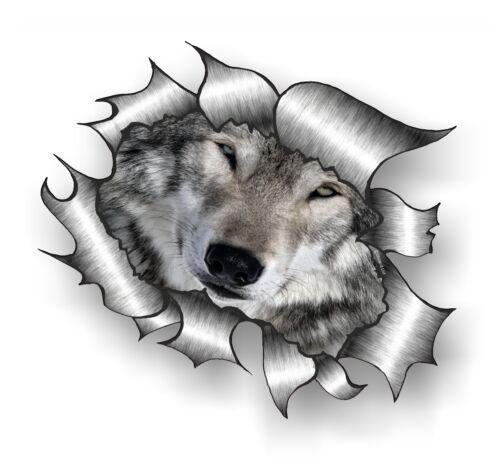 Groß Klassisch Zerrissen Metall /& Süß Wild Wolf Wölfe Gesicht Augen