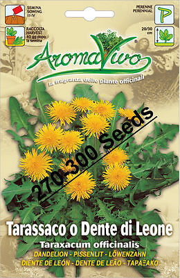 Anice Best Quality Very Fresh seeds 690-750 seeds Anise Herb Seeds