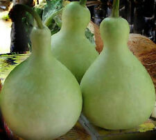 100 Seeds Bottle gourd Seeds new seed for 2017 Non-GMO, Heirloom