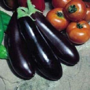 """(112 """"Rois de la qualité Aubergine Aubergine longue pourpre 2500 Graines-Jardin Légumes-afficher le titre d`origine cT3kAwt1-07204504-844815859"""
