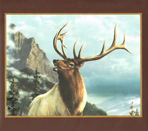 ROCKY MOUNTAIN BIG HORN SHEEP MOOSE AND