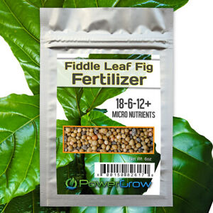 FIDDLE-FIG-Fertilizer-8-Month-Slow-Release-Fiddle-Leaf-Fig-Food-by-PowerGrow
