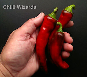 Chilli-Seeds-New-Mexico-Red-Chilli-Seeds-Amazing-Taste-10-Seeds
