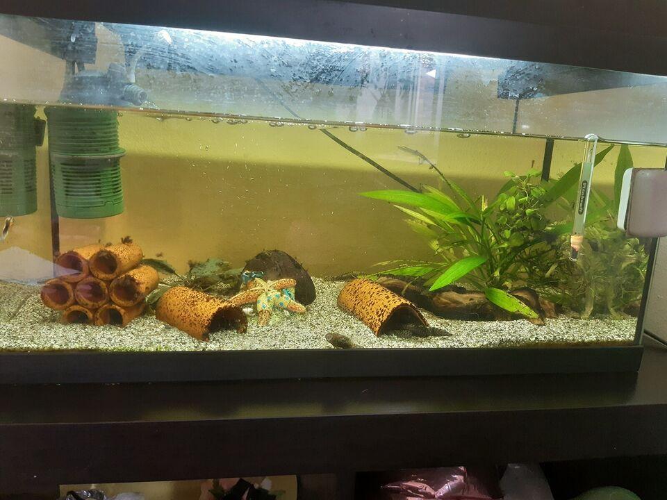 Akvarium, 54 liter, b: 60 d: 30 h: 45