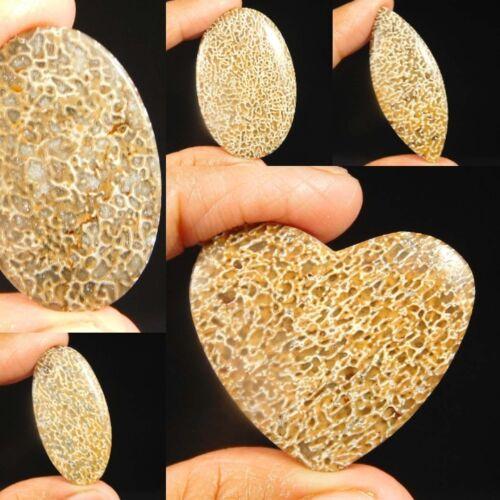 Hueso de dinosaurio 100/% Natural Suelto Cabujón piedras preciosas NRM4092-4100 Envío Gratuito