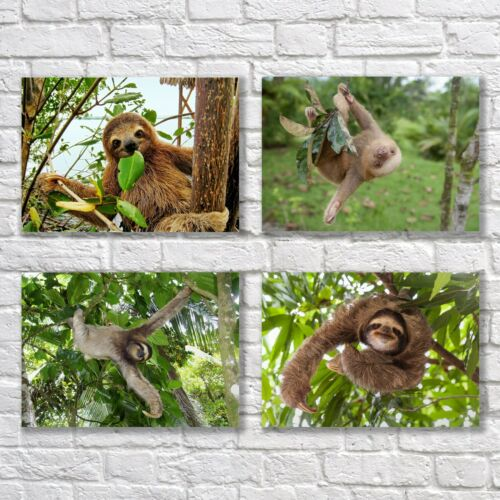 Sloths Poster A4 Set of 4 NEW Cute Animals Home Wall Decor