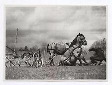 PHOTO ANCIENNE Voiture à cheval Attelage Accident Agriculture Champ Charrue