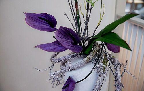 BUY 3 GET 2 FREE Purple Anthurium Andraeanu Seeds 120pcs Rare Flower