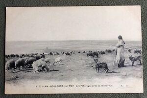 CPA-BOULOGNE-SUR-MER-62-Les-Paturages-pres-de-WIMEREUX-Moutons-Chiens