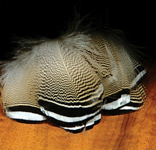 WOODDUCK rayée noir blanc Plumes pour mouches Canard flanc