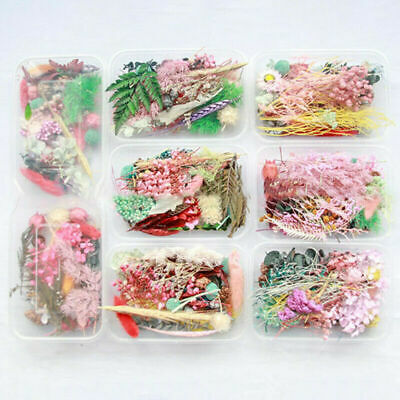 16 Pieces Dried Pressed Flowers DIY Embossed Photo Frame Phone Case Material