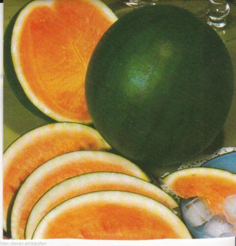 9 Korn Seeds Wassermelone Melone Dunkelgrün Rotfleischig Cucurbita melo ca