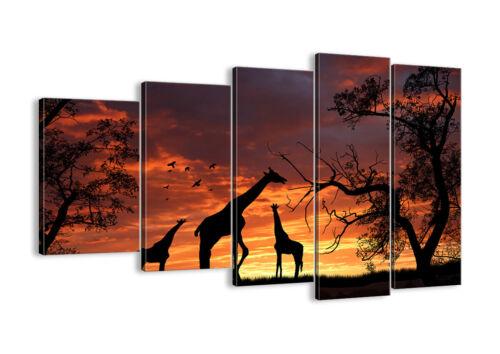 BILD LEINWAND Wandbild Giraffe Afrika Sonne Safari 0507 DE