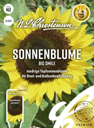 bienenfreundlich Sonnenblume Big Smile niedrige Topfsonnenblume 02880