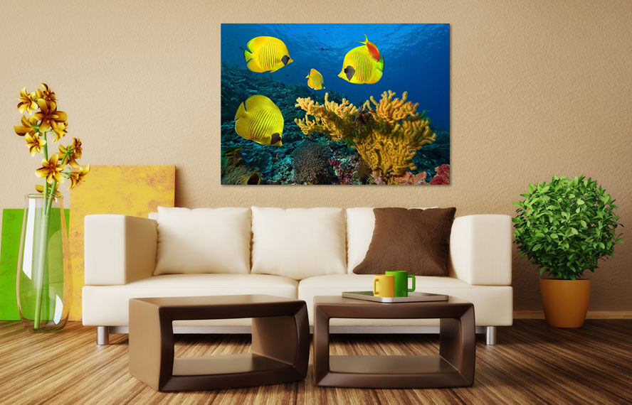 3D golden Fisch 424 Fototapeten Wandbild  BildTapete Familie AJSTORE DE