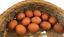 12 Blown Dark Brown Chicken Eggs  1 Hole