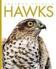 Amazing Animals Hawks by Kate Riggs (Hardback, 2015)