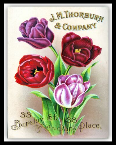 FLOWER SEED CATALOGUE COVER GARDEN GREENHOUSE ALLOTMENT METAL SIGN PLAQUE 2732