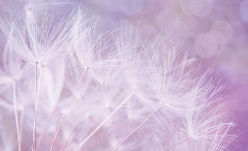 12555 VLIES Fototapete-ABSTRAKT DESIGN- -Pusteblumen Löwenzahn Optik Dekor Blume