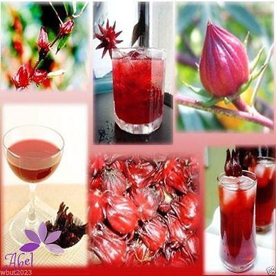 100pcs Hibiscus Sabdariffa Tea Roselle Seeds Home Garden