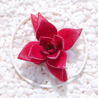 1-cut 4cm Crassula Momiji Matsuri Succulent live Plant Echeveria Home Garden pot