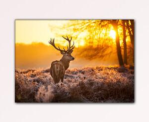 100x70cm hirsch geweih wald winter morgen nebel wild wandbild. Black Bedroom Furniture Sets. Home Design Ideas