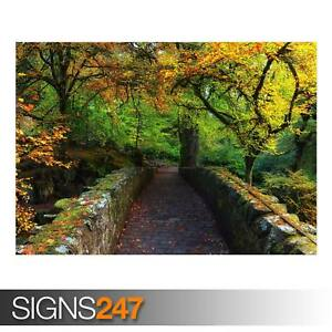 BEAUTIFUL-AUTUMN-COVER-PHOTO-AD977-NATURE-POSTER-Poster-Print-Art-A1-A2-A3