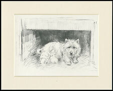 WESTIE TERRIER MUM AND PUPS CHARMING 1930'S DOG ART PRINT by KF BARKER MOUNTED