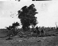 8x10 Civil War Photo: Dead Soldiers On Miller Farm, Antietam - Sharpsburg