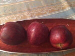 Apfel Frucht Fruchte Dekofruchte Tischdeko Dekoration Kuche