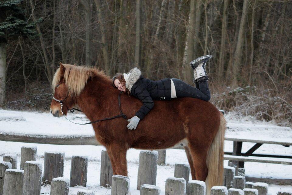 Islænder, vallak, 9 år