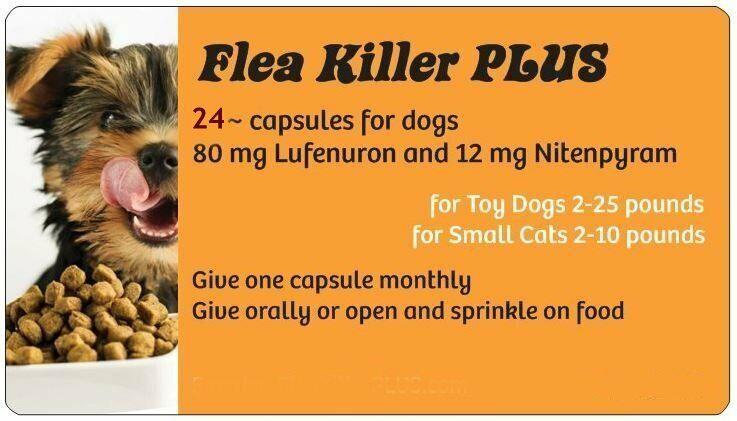 Spring Blowout Sale Flea Killer PLUS for Dogs 5-25 lbs. 24 orange Monthly Caps