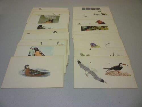 1961 Field Enterprises Lot of 48 Educational Bird Cards