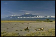 288020 Mount Kilimanjaro A4 Photo Print