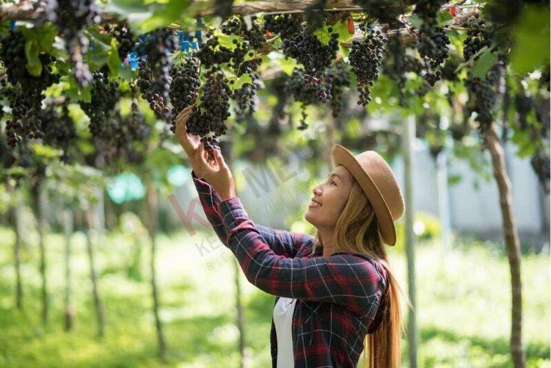 Tu hogar en un desarrollo vitivinícola y ecuestre en SMA a pie de carretera