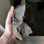thumbnail 3 - Gatuto meteorite. New observed fall: 24Apr2020 in Kenya. Museum piece - 2589g