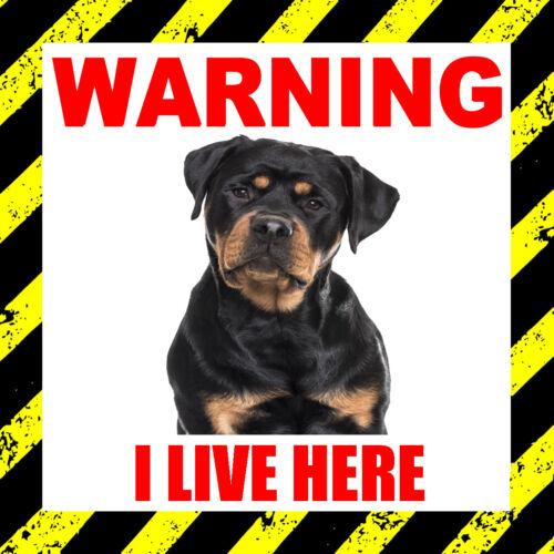"mascota ventana de Sticker animal, Advertencia yo vivo aquí /""Rottweiler/"" perro puerta"