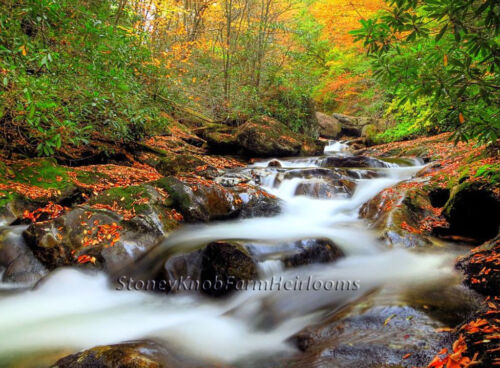Wooded Mountain Stream in Autumn ~ Landscapes ~ DIY Counted Cross Stitch Pattern