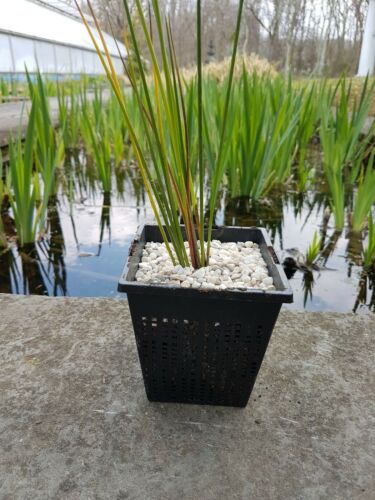 "13/"" Square Koi Pond Plant Basket for Large Pond Planting of Large Aquatic Plants"