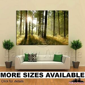 Forest with sunbeams  3.2 Wall Art Canvas Picture Print